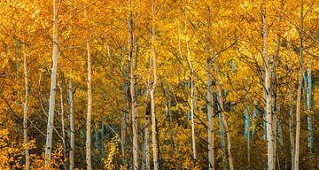 Herbst von Reinier Snijders