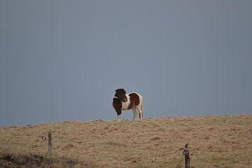 Paard von Noor Zwart