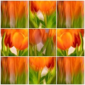 Tulpen | C van Rob van der Pijll