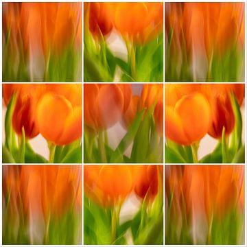 Tulpen | C von Rob van der Pijll