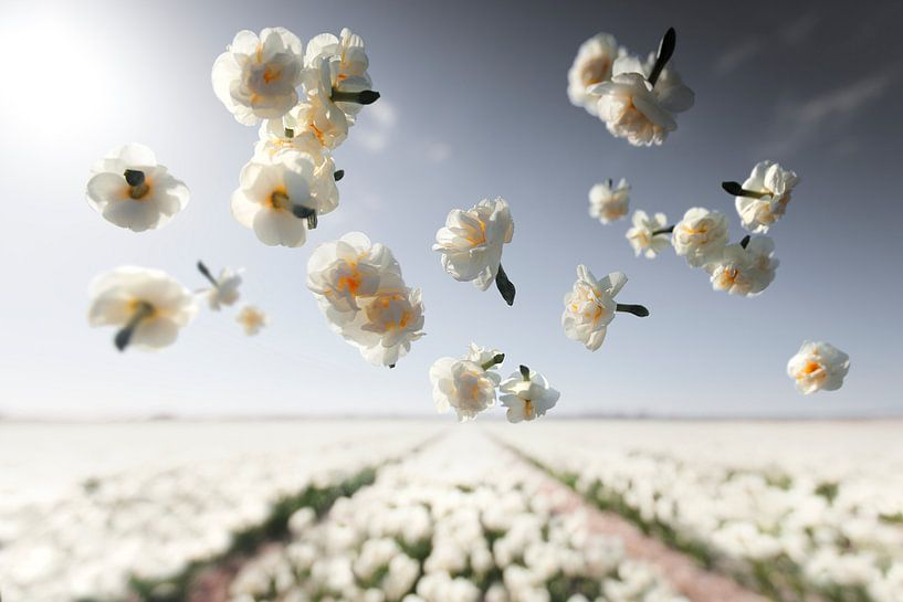 Blumenkraft - Fröhlichkeit von Claire Droppert