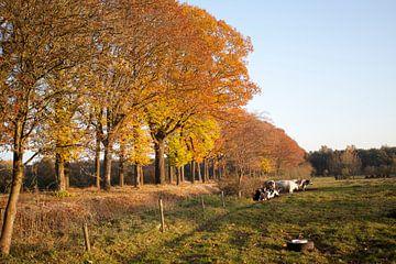 Bomenrij in Brabant van Kees van Dun