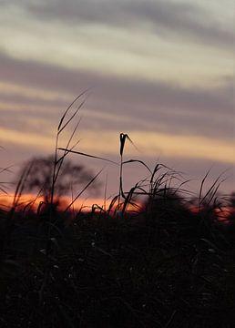 Sonnenuntergang von Anke Winters