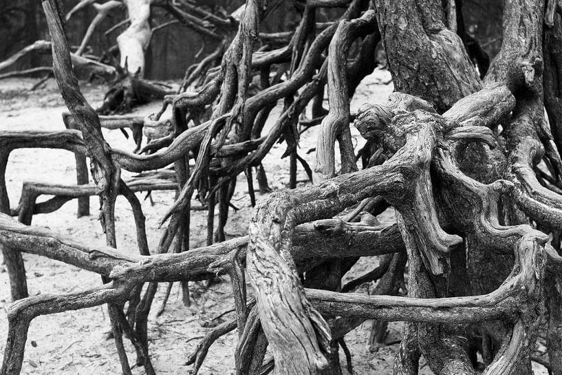 Roots van Colin van der Bel