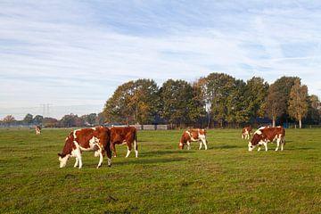 Koeien in een Hollands landschap von Nel Diepstraten