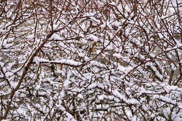 schneebedeckte Äste von Merijn Loch