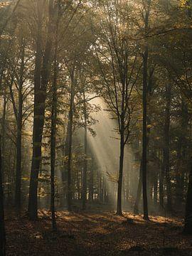 In de stralen van de zon op de bosweg van Jakub Wencek