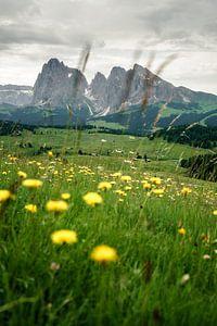 Almwiese mit Blumen in Südtirol