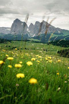 Alpenweide met bloemen in Zuid-Tirol van road to aloha