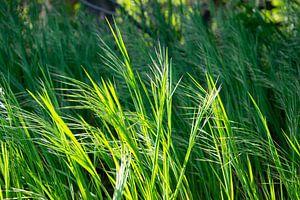 grassprieten in de wind