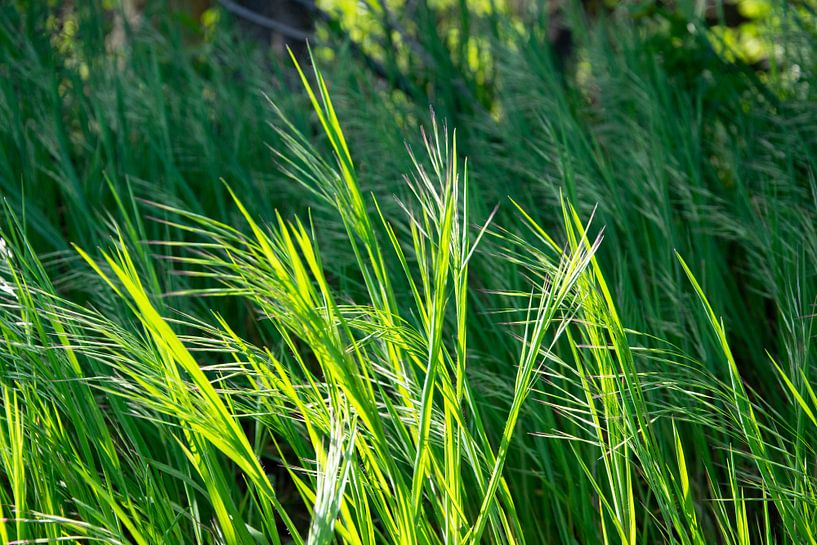 grassprieten in de wind van RK