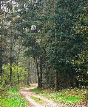 Bospad tussen Dennebomen van Corinne Welp