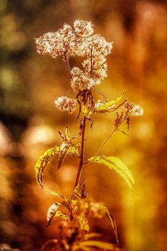 Grässer im Licht von Max Steinwald