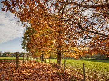 Herfst in Zuid-Limburg van