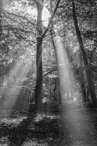 Zonnestralen langs een boom van