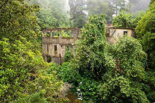 Overgroeide ruïne