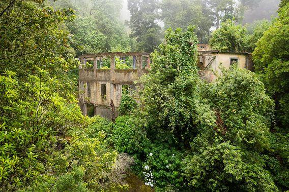 Overgroeide ruïne van Michel van Kooten