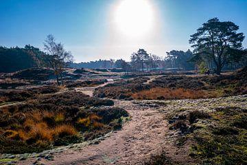 Pad naar de zon - Heide en bos van de Utrechtse Heuvelrug van John Ozguc