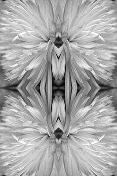 Chrysantheme Klassisch Silber von EH? by ILSEHA