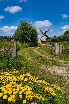 Zomer in Nederland van Joran Quinten