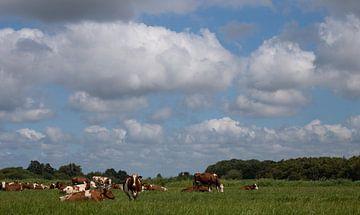 Koeien van By Foto Joukje