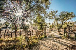 Hek en boom en tegenlicht