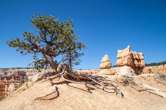 BRYCE CANYON & Old Tree van Melanie Viola