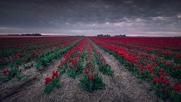 Rood von Klaas Fidom
