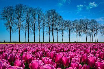 Frühling im Polder von Rietje Bulthuis
