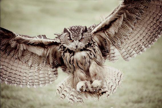 impressive flight...