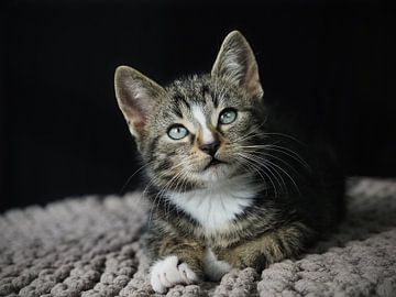Starende kitten