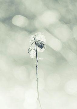 eenzame bloem von eric brouwer