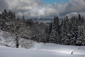 Stille des Winters im Schwarzwald von Ella Schnur