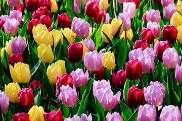 Kleurige Verzameling Tulpen von