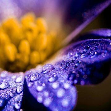 druppels op een paarse bloem von de buurtfotograaf Leontien