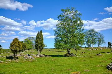Schwedische Landschaft 155 von Geertjan Plooijer
