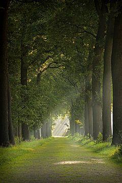 bomen laantje von Marco Jansen