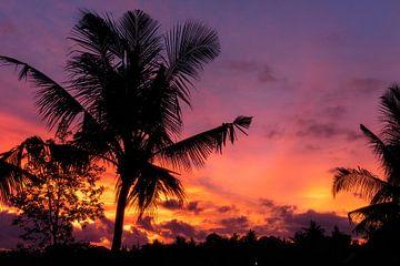Sonnenuntergang auf Bali mit Palmen von road to aloha