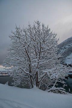 Schneebedeckter Baum von Merijn Loch