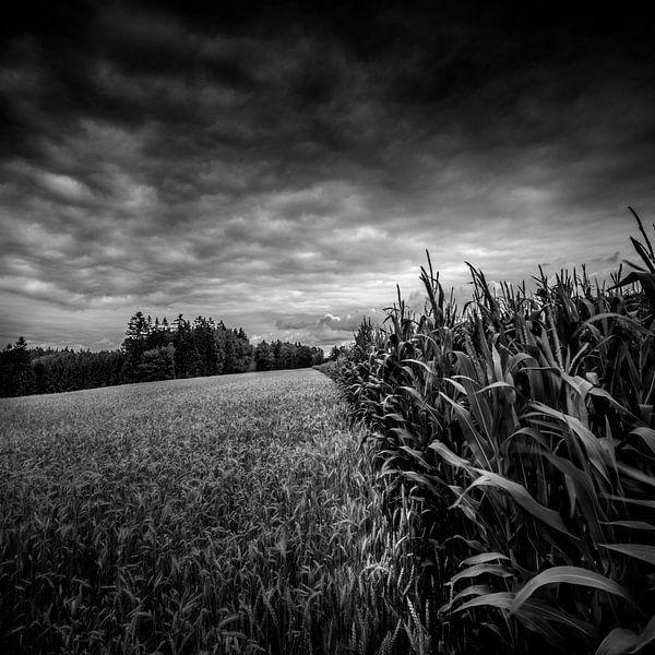 Between corn and maize van Ruud Peters