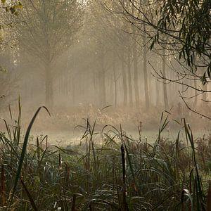 zonnestralen in de nevel van het bos