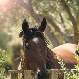 Paard in de middagzon. van Pieter van Roijen