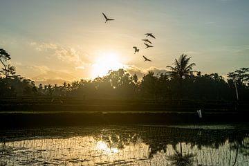 Vogels  over een rijstveld van Ellis Peeters
