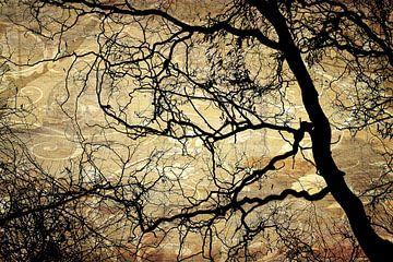 Baum Äste und Textur van Markus Wegner