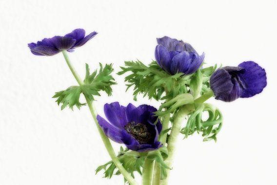 Kunstige anemonen van Jessica Berendsen