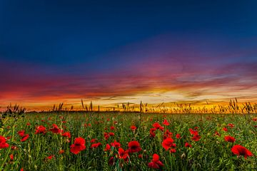 Sonnenuntergang in der Umgebung von Huis ter Heide von Fred van Bergeijk