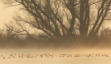 Watervogels op een mistige ochtend van Jacques van der Neut
