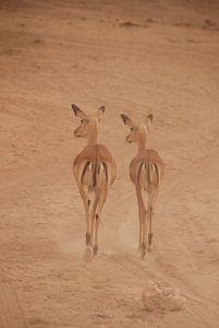 Gazelle's van