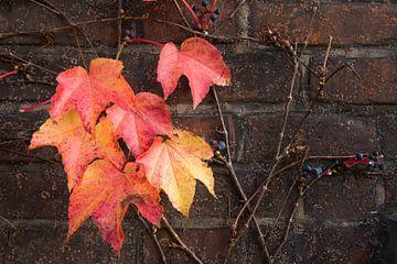 Glühende Herbstfarben von Denis Feiner