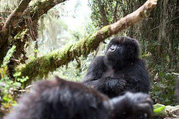 Wandelsafari naar de wilde berggorilla's in Rwanda van Teun Janssen